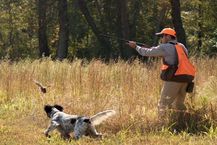 Hunting quail down South!