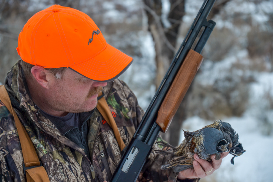 NW Oklahoma Quail Hunt